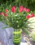 12_red_roses_in__4d5270f64f36f
